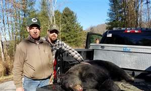 Road-killed-black-bear